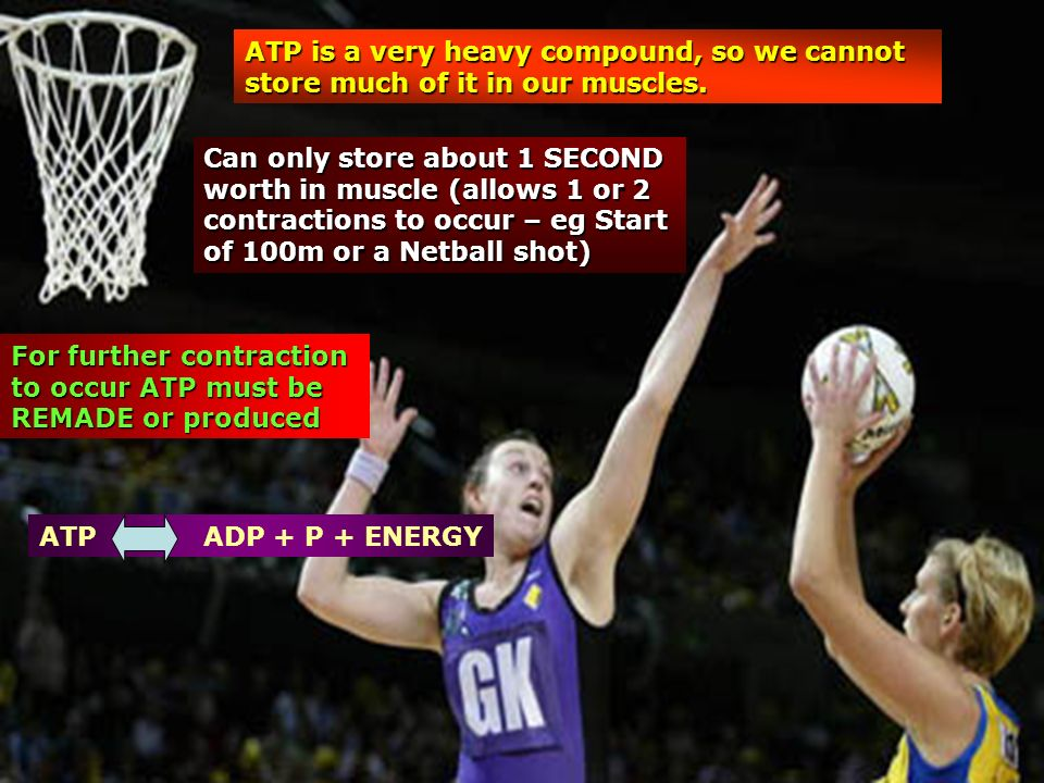 ATP is a very heavy compound, so we cannot store much of it in our muscles.