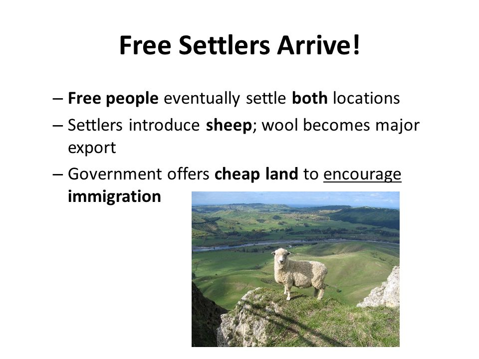 Free Settlers Arrive! – Free people eventually settle both locations – Settlers introduce sheep; wool becomes major export – Government offers cheap l