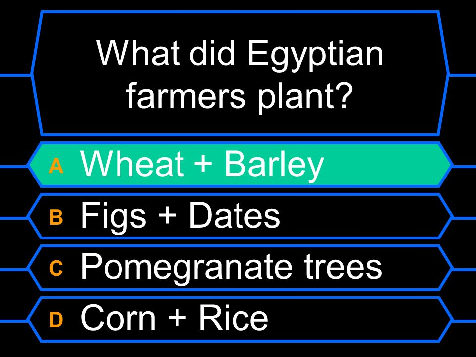 What did Egyptian farmers plant? A Wheat + Barley B Figs + Dates C Pomegranate trees D Corn + Rice