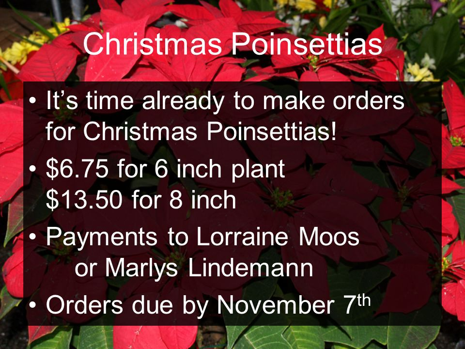 Christmas Poinsettias Its time already to make orders for Christmas Poinsettias! $6.75 for 6 inch plant $13.50 for 8 inch Payments to Lorraine Moos or