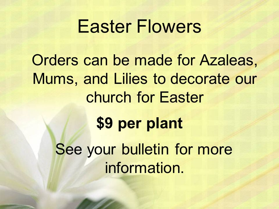 Easter Flowers Orders can be made for Azaleas, Mums, and Lilies to decorate our church for Easter $9 per plant See your bulletin for more information.