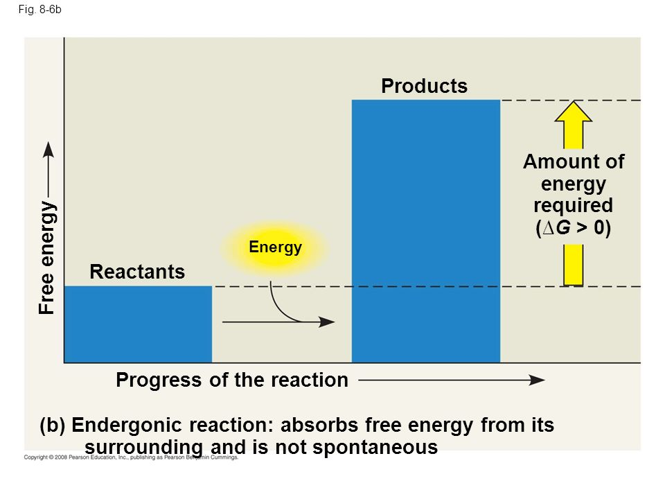 Fig. 8-6b Energy (b) Endergonic reaction: absorbs free energy from its surrounding and is not spontaneous Progress of the reaction Free energy Product