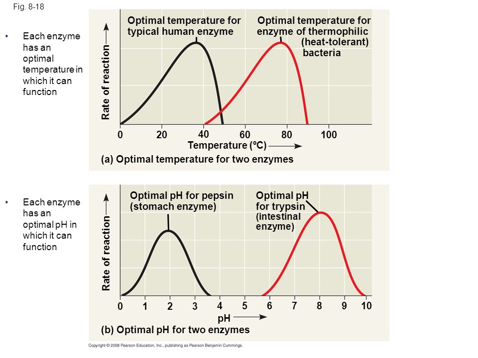 Fig. 8-18 Rate of reaction Optimal temperature for enzyme of thermophilic (heat-tolerant) bacteria Optimal temperature for typical human enzyme (a) Op