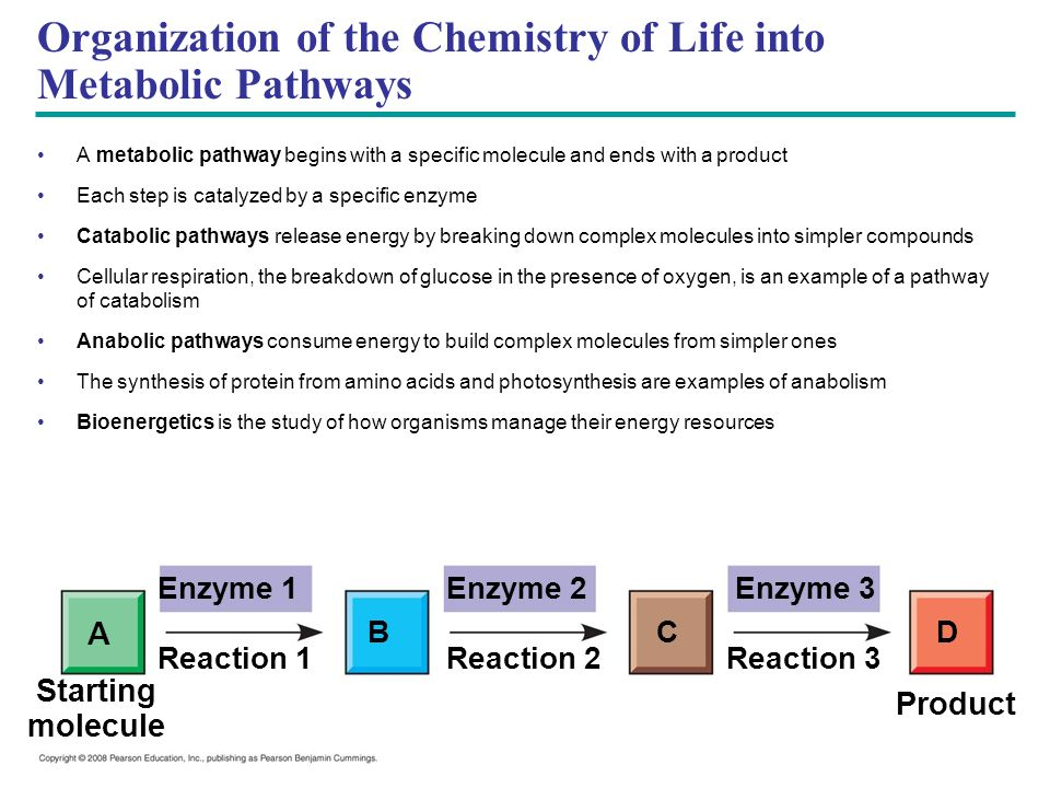 Enzyme 1Enzyme 2Enzyme 3 DCB A Reaction 1Reaction 3Reaction 2 Starting molecule Product Organization of the Chemistry of Life into Metabolic Pathways