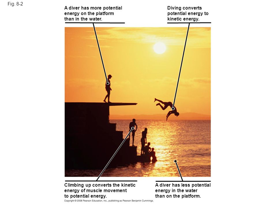 Fig. 8-2 Climbing up converts the kinetic energy of muscle movement to potential energy. A diver has less potential energy in the water than on the pl