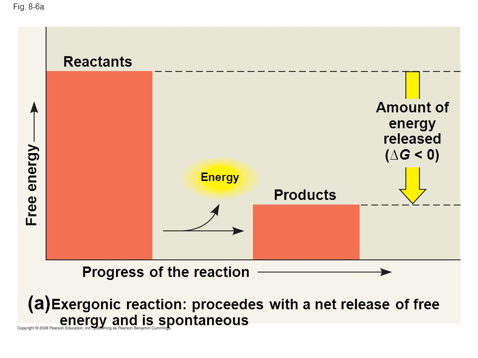 Fig. 8-6a Energy (a) Exergonic reaction: proceedes with a net release of free energy and is spontaneous Progress of the reaction Free energy Products