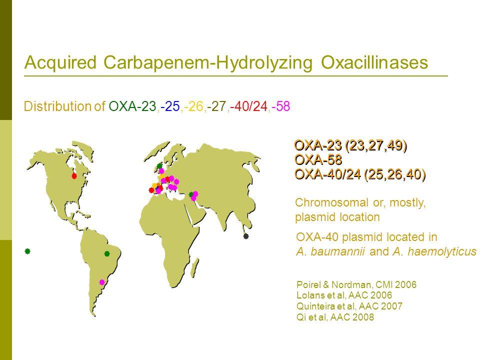 Distribution of OXA-23,-25,-26,-27,-40/24,-58 Acquired Carbapenem-Hydrolyzing Oxacillinases OXA-23 (23,27,49) OXA-58 OXA-40/24 (25,26,40) Chromosomal
