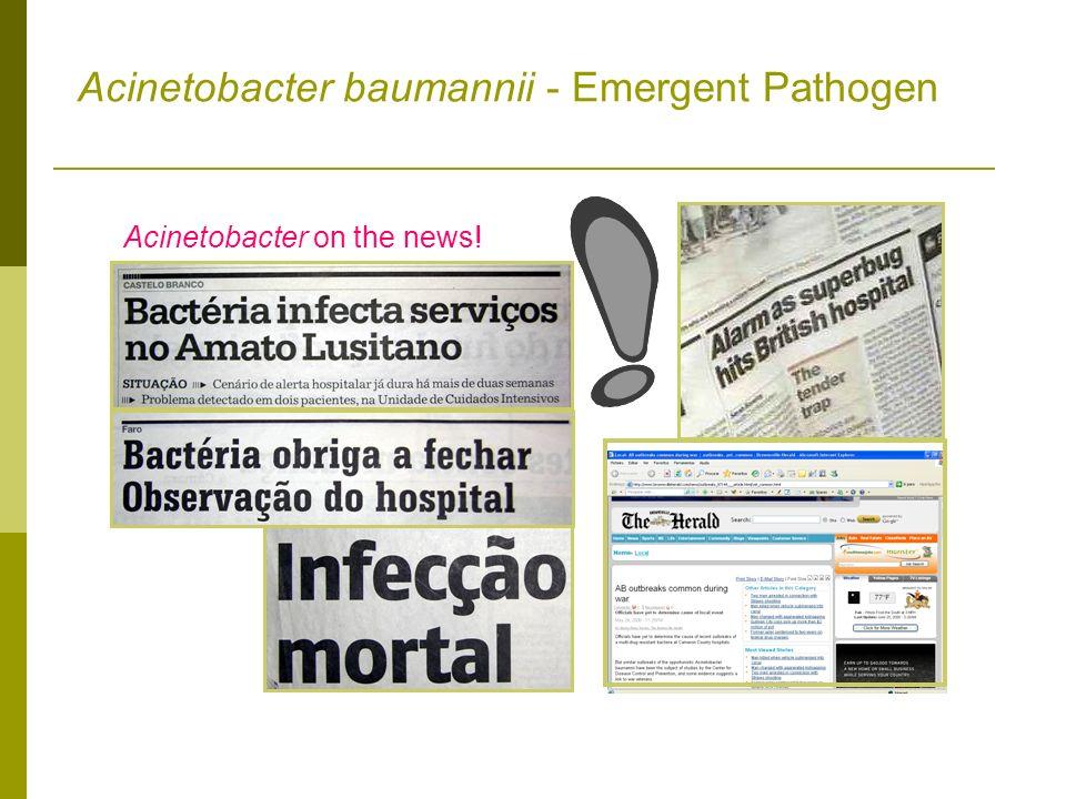 Acinetobacter baumannii - Emergent Pathogen Acinetobacter on the news!