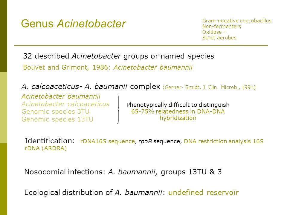 Genus Acinetobacter 32 described Acinetobacter groups or named species Bouvet and Grimont, 1986: Acinetobacter baumannii A. calcoaceticus- A. baumanii
