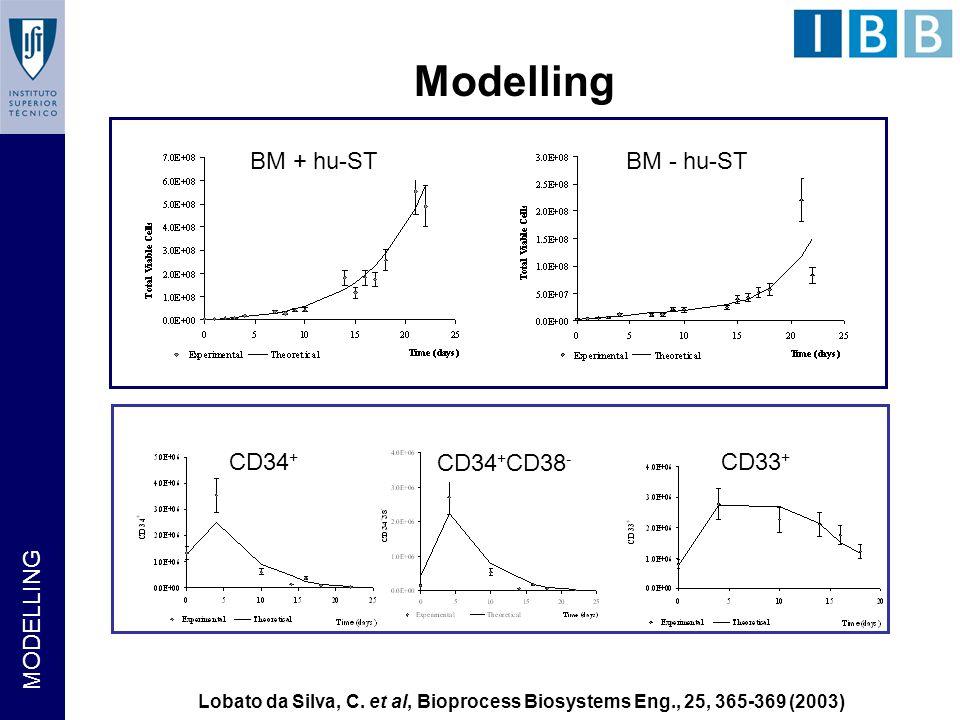 BM + hu-STBM - hu-ST CD34 + CD34 + CD38 - CD33 + Modelling Lobato da Silva, C.