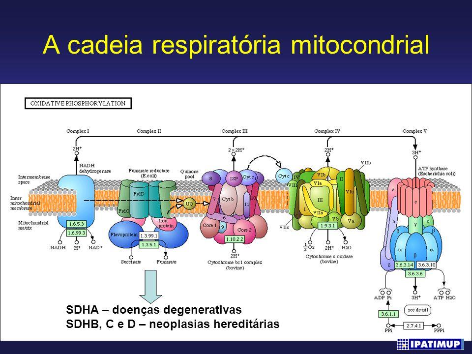A cadeia respiratória mitocondrial SDHA – doenças degenerativas SDHB, C e D – neoplasias hereditárias