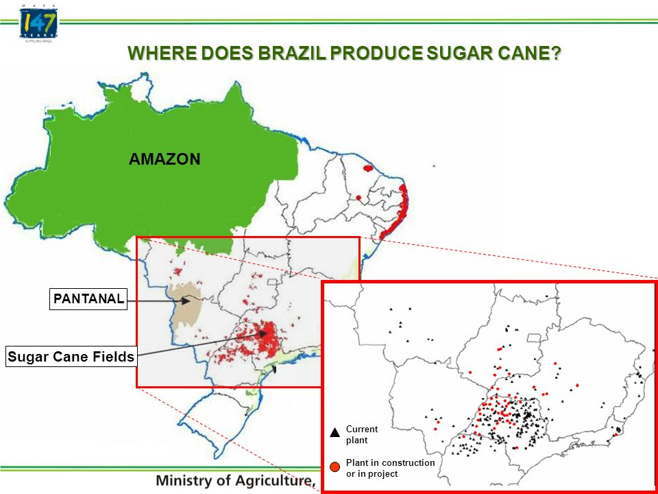 Plant in construction or in project Current plant AMAZON PANTANAL Sugar Cane Fields WHERE DOES BRAZIL PRODUCE SUGAR CANE