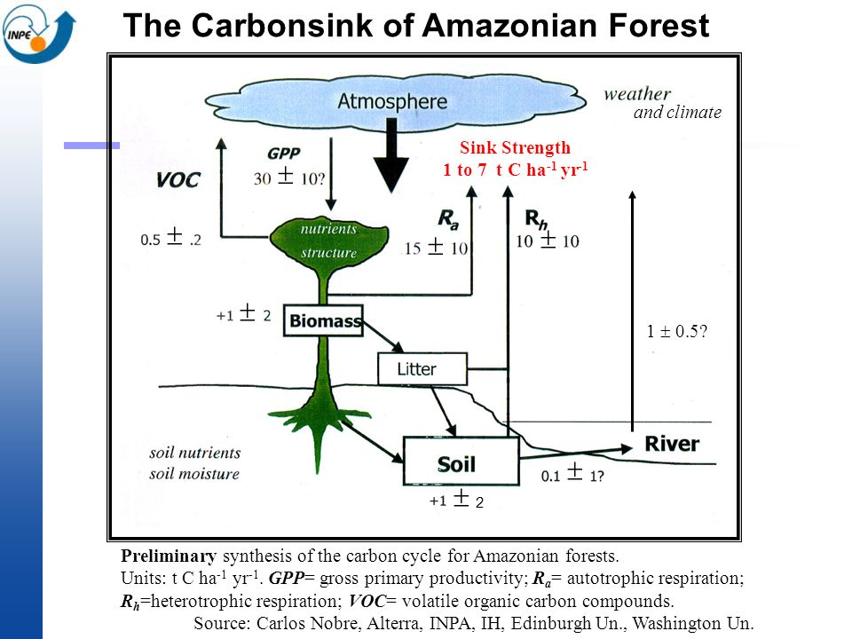 The Carbonsink of Amazonian Forest 2 Sink Strength 1 to 7 t C ha -1 yr -1 and climate Preliminary synthesis of the carbon cycle for Amazonian forests.