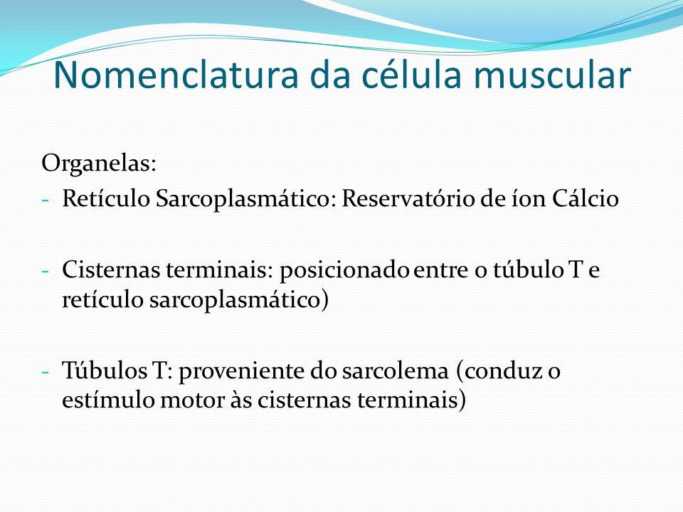 Nomenclatura da célula muscular Organelas: - Retículo Sarcoplasmático: Reservatório de íon Cálcio - Cisternas terminais: posicionado entre o túbulo T