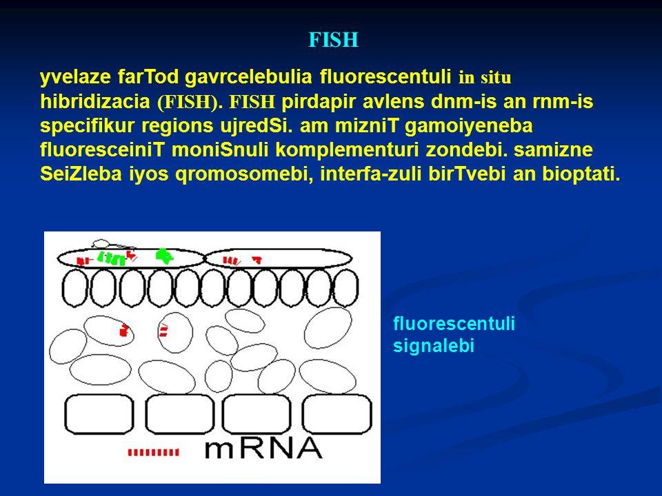 FISH yvelaze farTod gavrcelebulia fluorescentuli in situ hibridizacia (FISH). FISH pirdapir avlens dnm-is an rnm-is specifikur regions ujredSi. am miz