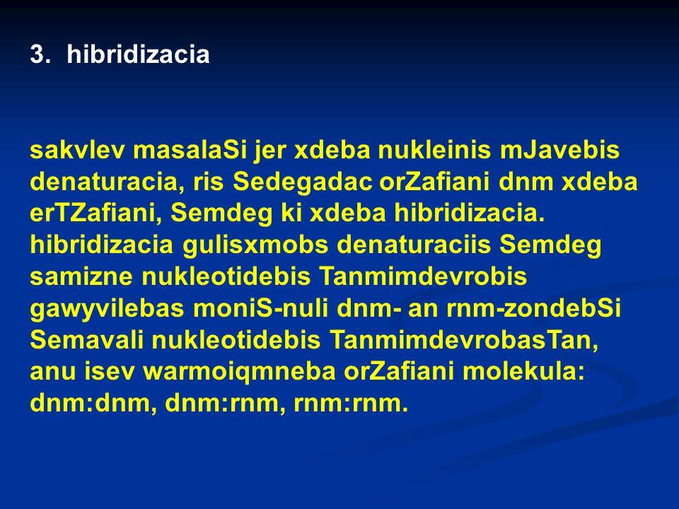 3. hibridizacia sakvlev masalaSi jer xdeba nukleinis mJavebis denaturacia, ris Sedegadac orZafiani dnm xdeba erTZafiani, Semdeg ki xdeba hibridizacia.