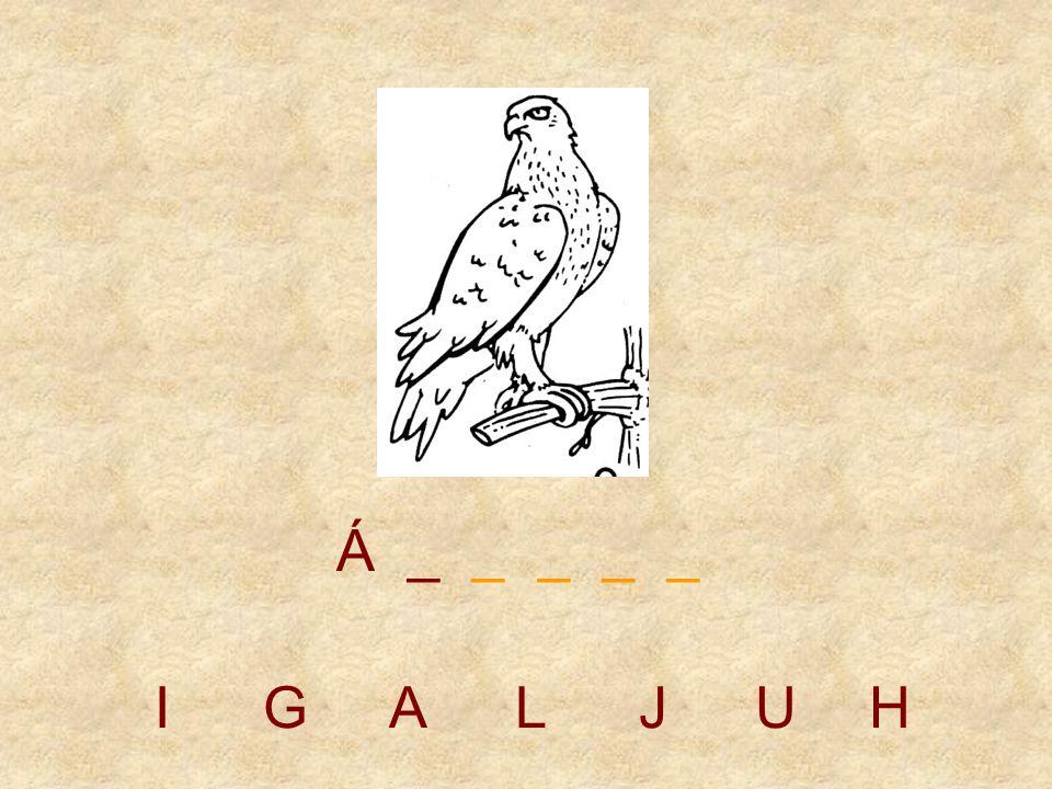 IGALJUH _ _ _