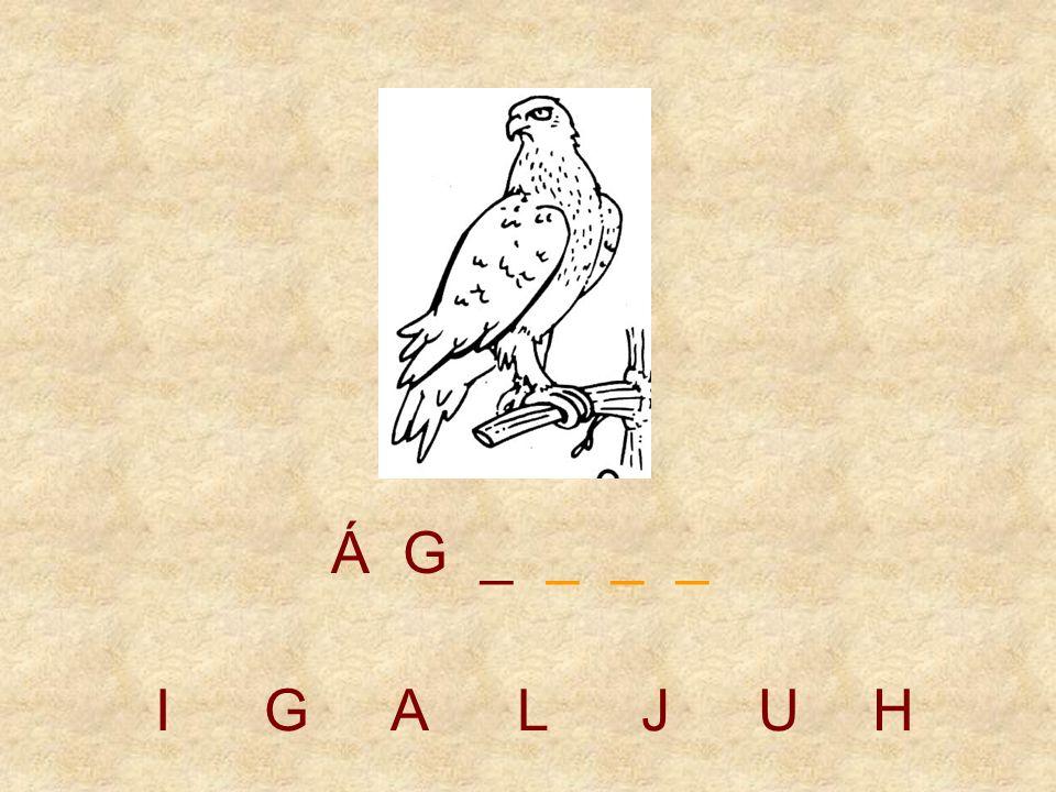 IGALJUH Á _ _ _ _ _