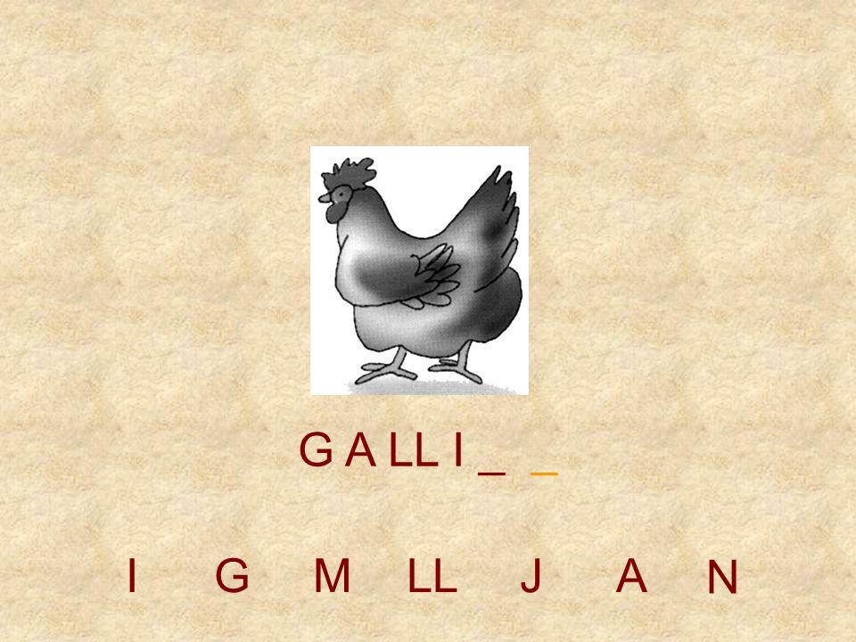 IGMLLJAN G A LL _ _ _