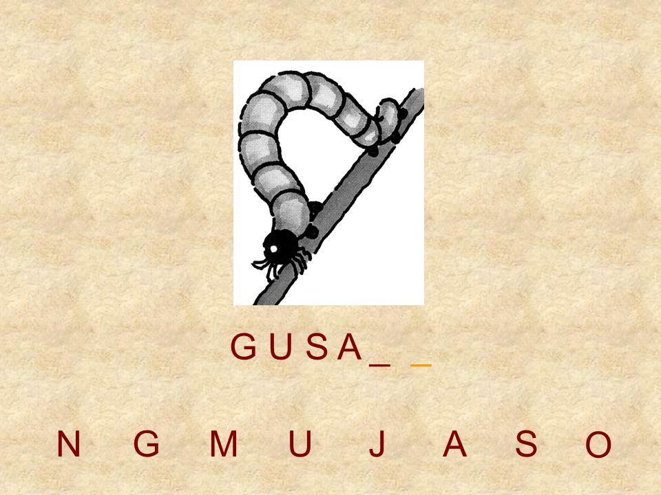 NGMUJAS G U S _ _ _ O