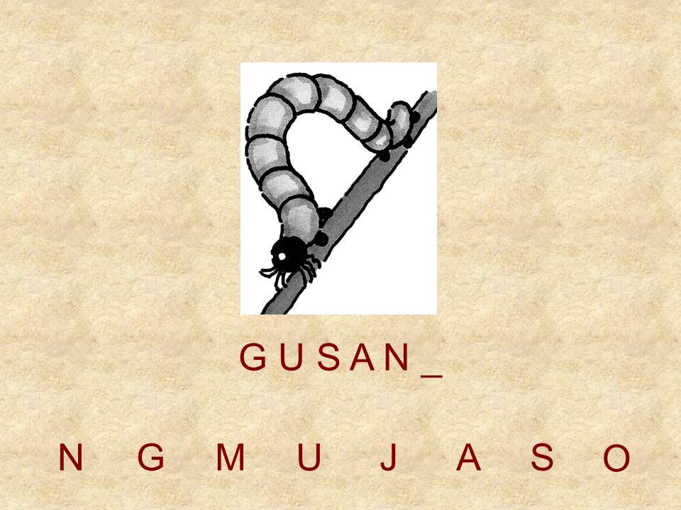 NGMUJAS G U S A _ _ O