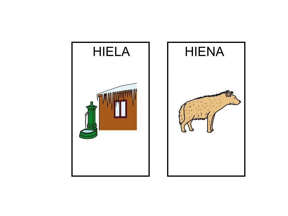 HIELA HIENA