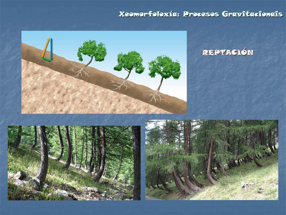 REPTACIÓN Xeomorfoloxía: Procesos Gravitacionais