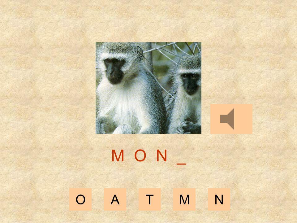 OATMN M O _ _