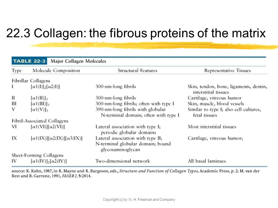 Copyright (c) by W. H. Freeman and Company 22.3 Collagen: the fibrous proteins of the matrix