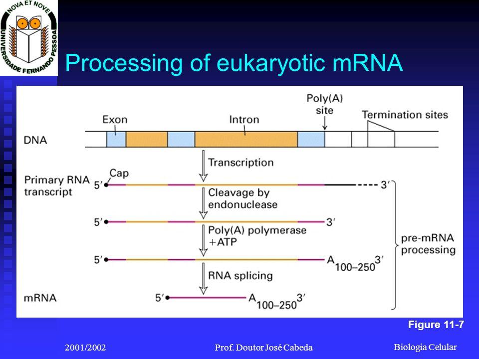 Biologia Celular 2001/2002Prof. Doutor José Cabeda Processing of eukaryotic mRNA Figure 11-7
