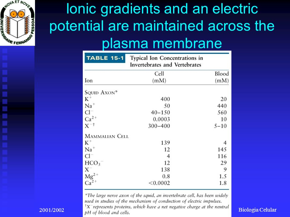 Biologia Celular 2001/2002Prof. Doutor José Cabeda Ionic gradients and an electric potential are maintained across the plasma membrane