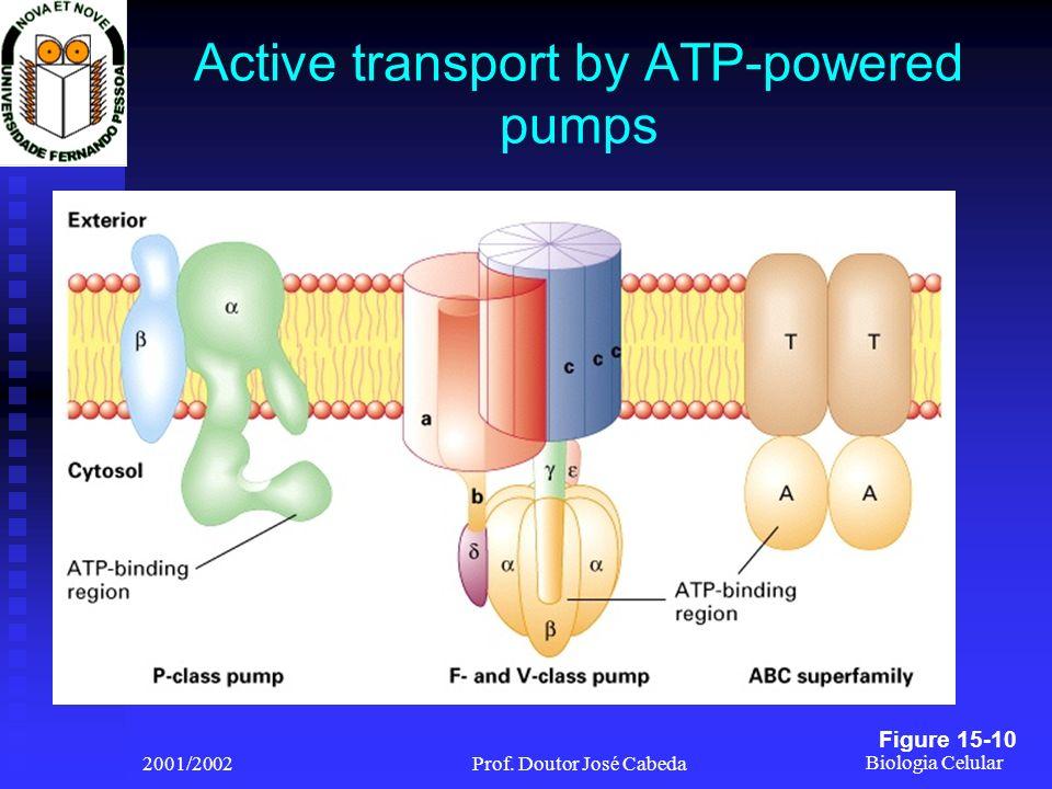 Biologia Celular 2001/2002Prof. Doutor José Cabeda Active transport by ATP-powered pumps Figure 15-10