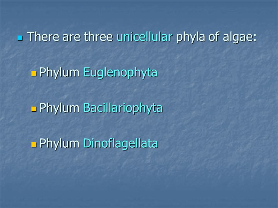 There are three unicellular phyla of algae: There are three unicellular phyla of algae: Phylum Euglenophyta Phylum Euglenophyta Phylum Bacillariophyta
