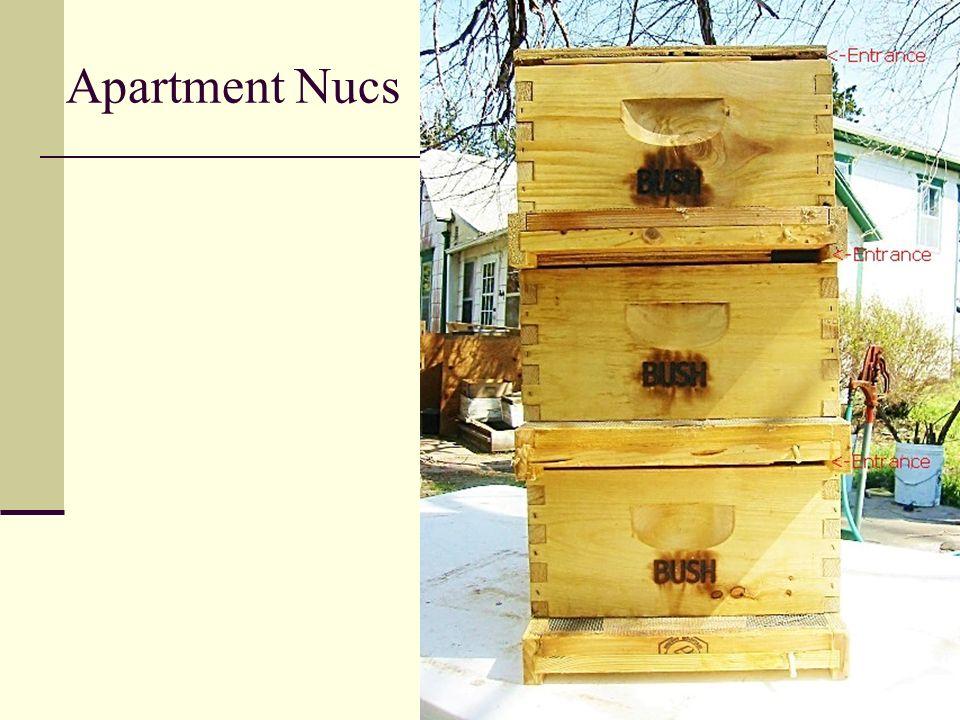 Apartment Nucs