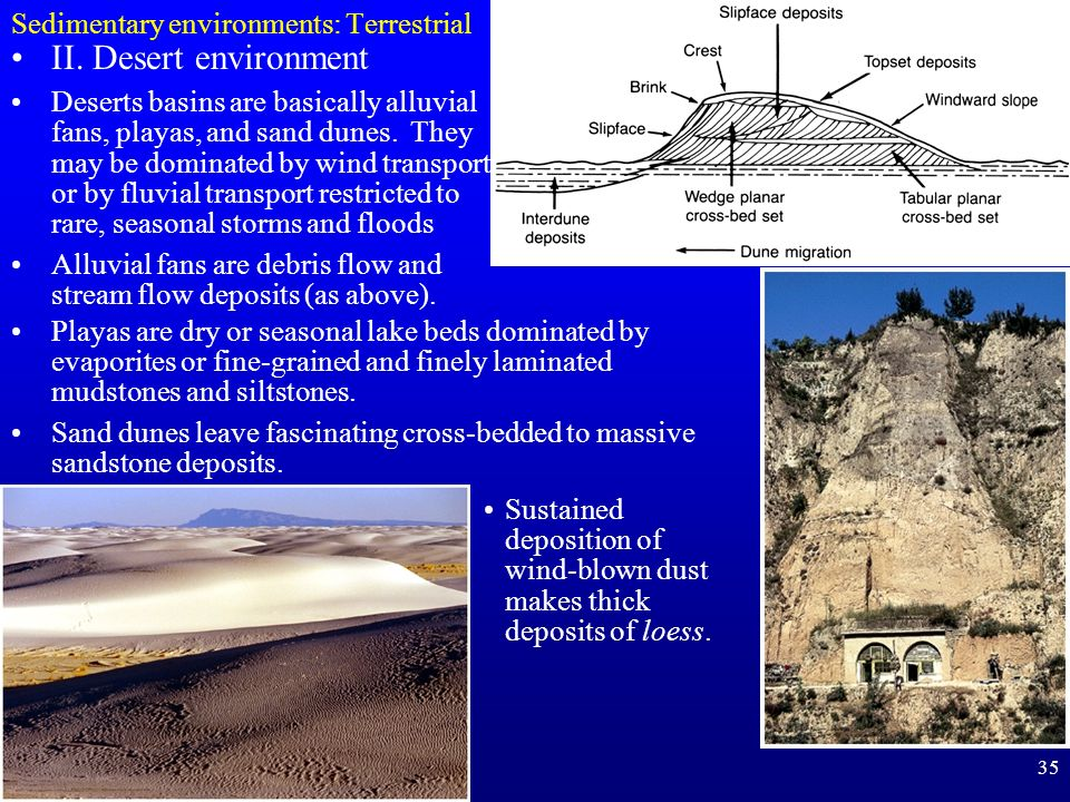 35 Sedimentary environments: Terrestrial Sustained deposition of wind-blown dust makes thick deposits of loess. II. Desert environment Deserts basins