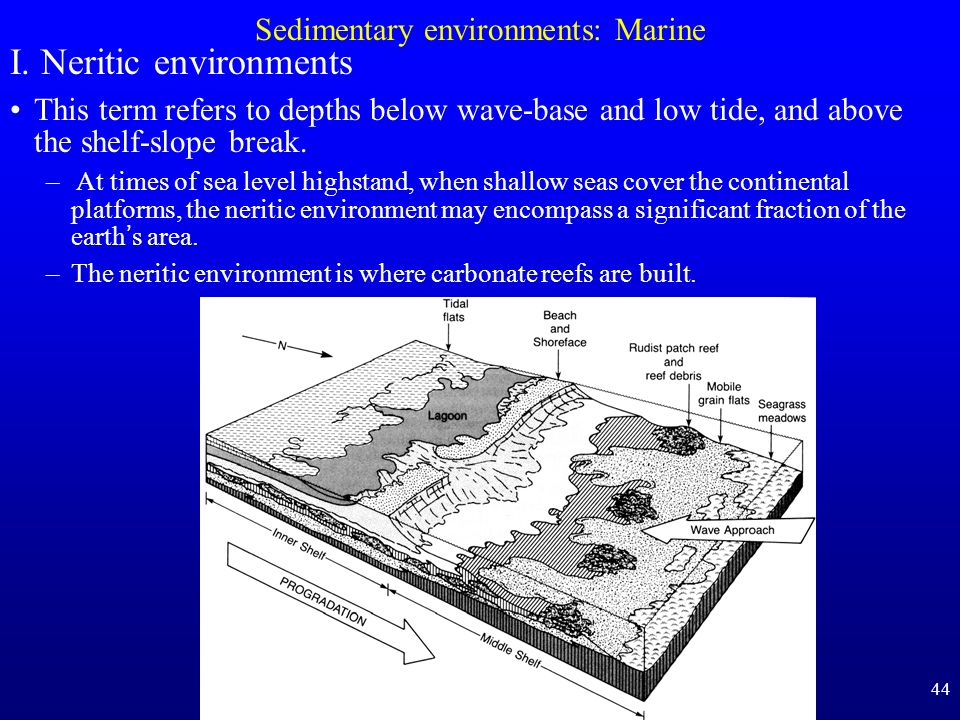 44 Sedimentary environments: Marine I. Neritic environments This term refers to depths below wave-base and low tide, and above the shelf-slope break.