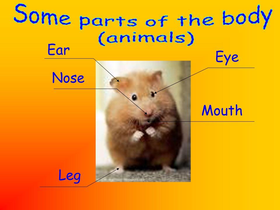 Ear Nose Leg Mouth Eye