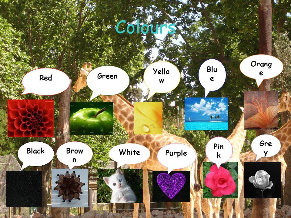 Colours Red Green Yello w Blu e Orang e BlackBrow n White Purple Pin k Gre y