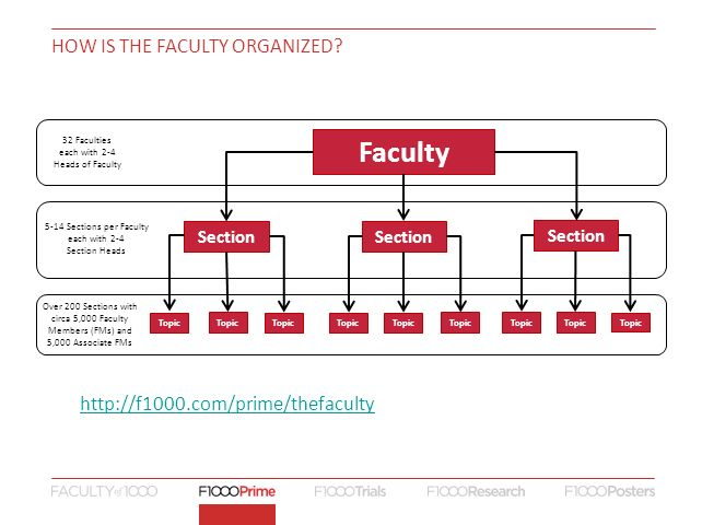 HOW IS THE FACULTY ORGANIZED? Faculty Section Topic 32 Faculties each with 2-4 Heads of Faculty 5-14 Sections per Faculty each with 2-4 Section Heads