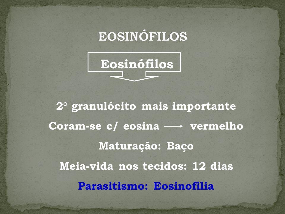 Eosinófilos 2° granulócito mais importante Coram-se c/ eosina vermelho Maturação: Baço Meia-vida nos tecidos: 12 dias Parasitismo: Eosinofilia