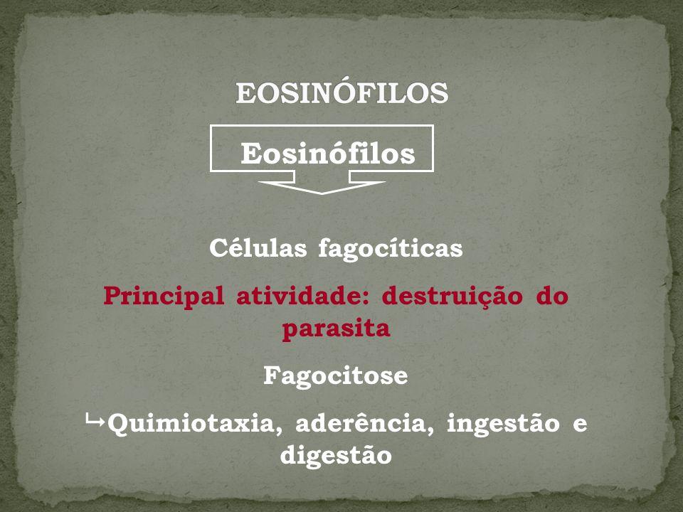 Eosinófilos Células fagocíticas Principal atividade: destruição do parasita Fagocitose Quimiotaxia, aderência, ingestão e digestão
