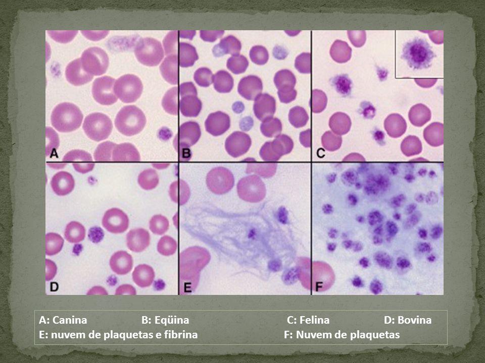 A: Canina B: Eqüina C: Felina D: Bovina E: nuvem de plaquetas e fibrina F: Nuvem de plaquetas