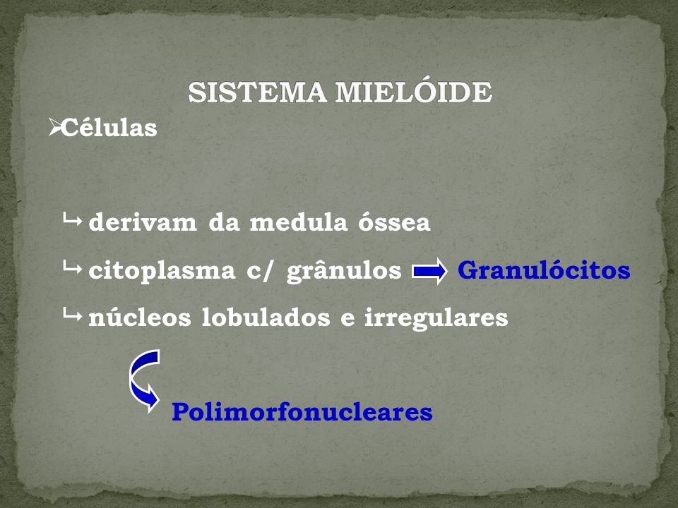 Células derivam da medula óssea citoplasma c/ grânulos Granulócitos núcleos lobulados e irregulares Polimorfonucleares