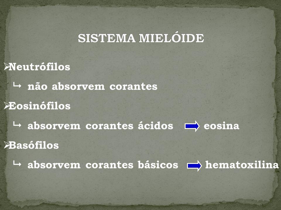 Neutrófilos não absorvem corantes Eosinófilos absorvem corantes ácidos eosina Basófilos absorvem corantes básicos hematoxilina