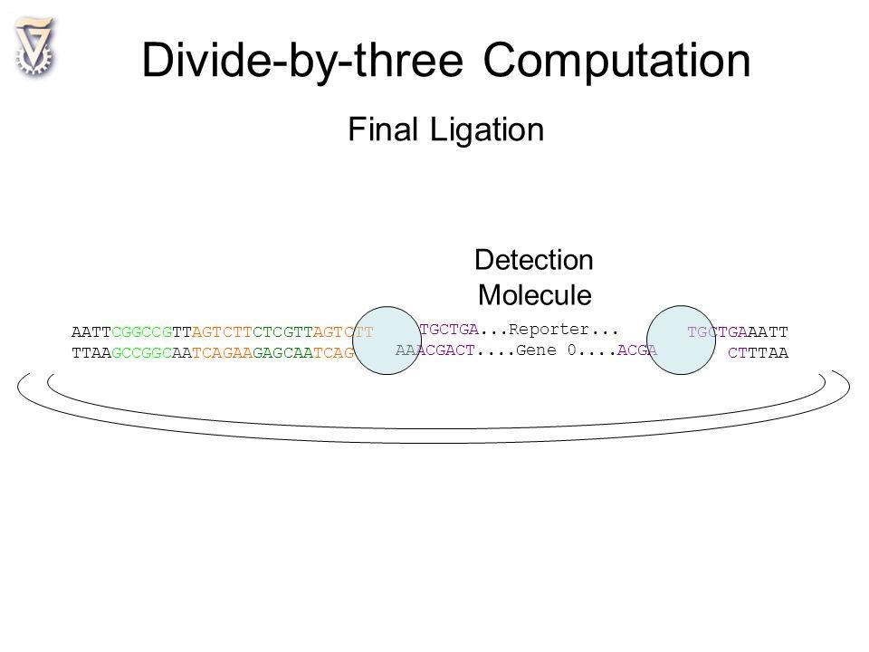 AATTCGGCCGTTAGTCTTCTCGTTAGTCTT TGCTGAAATT TTAAGCCGGCAATCAGAAGAGCAATCAG CTTTAA TGCTGA...Reporter... AAACGACT....Gene 0....ACGA Detection Molecule Divid