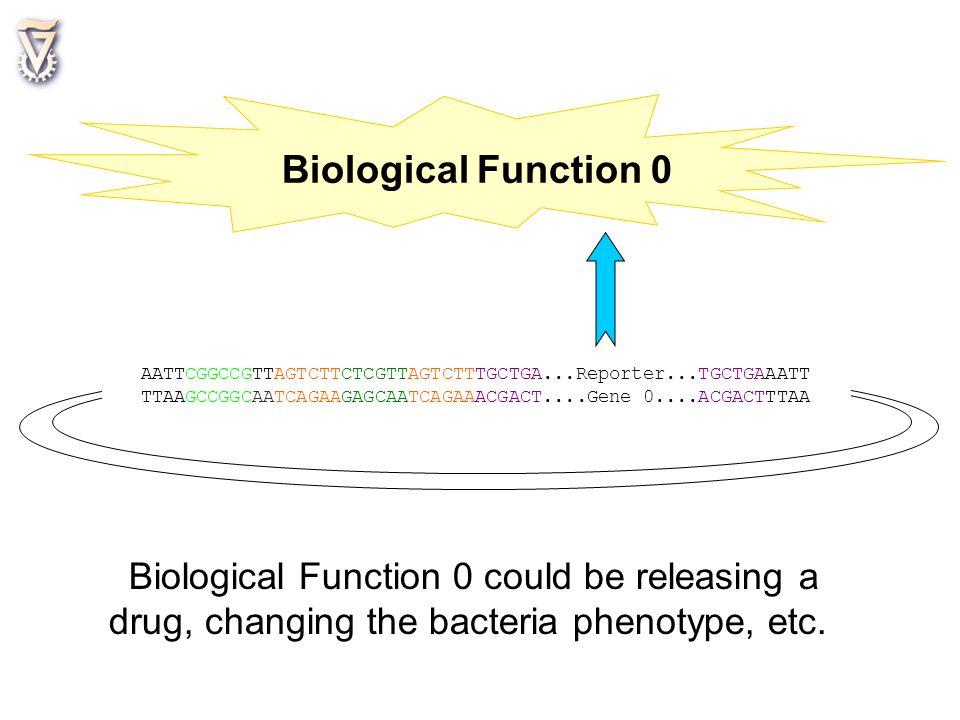 AATTCGGCCGTTAGTCTTCTCGTTAGTCTTTGCTGA...Reporter...TGCTGAAATT TTAAGCCGGCAATCAGAAGAGCAATCAGAAACGACT....Gene 0....ACGACTTTAA Biological Function 0 Biolog