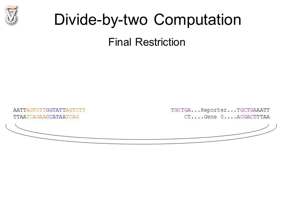 AATTAGTCTTGGTATTAGTCTT TGCTGA...Reporter...TGCTGAAATT TTAATCAGAACCATAATCAG CT....Gene 0....ACGACTTTAA Divide-by-two Computation Final Restriction