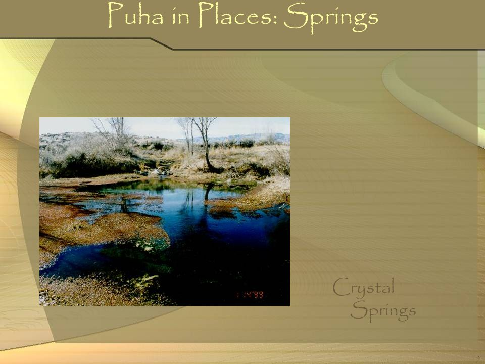 9 Puha in Places: Springs Crystal Springs