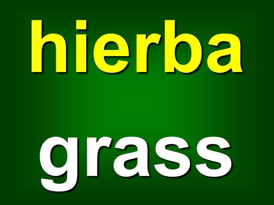 hierbagrass
