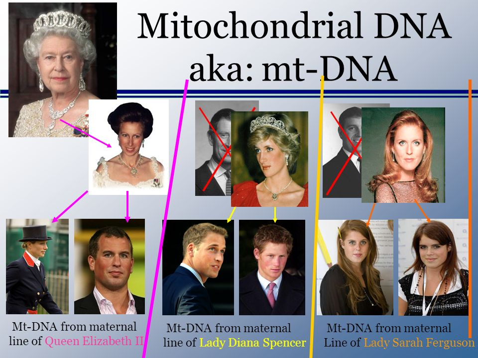Mitochondrial DNA aka: mt-DNA Mt-DNA from maternal line of Queen Elizabeth II Mt-DNA from maternal line of Lady Diana Spencer Mt-DNA from maternal Lin